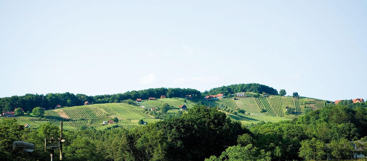 Sonne und Keller - Weingarten-Panorama
